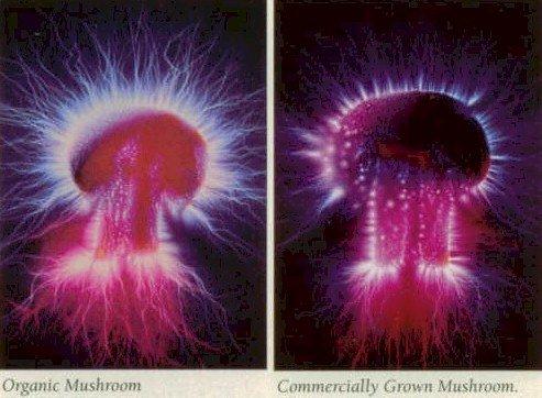 kirlian raw food photography mushroom