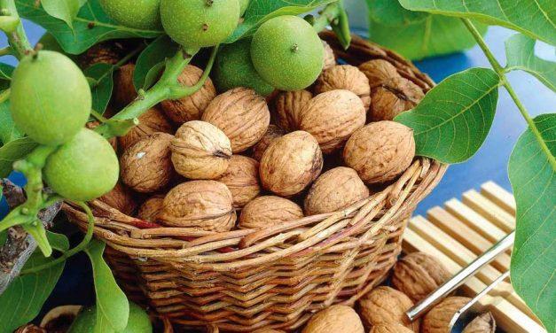 Hoe gezond zijn walnoten?